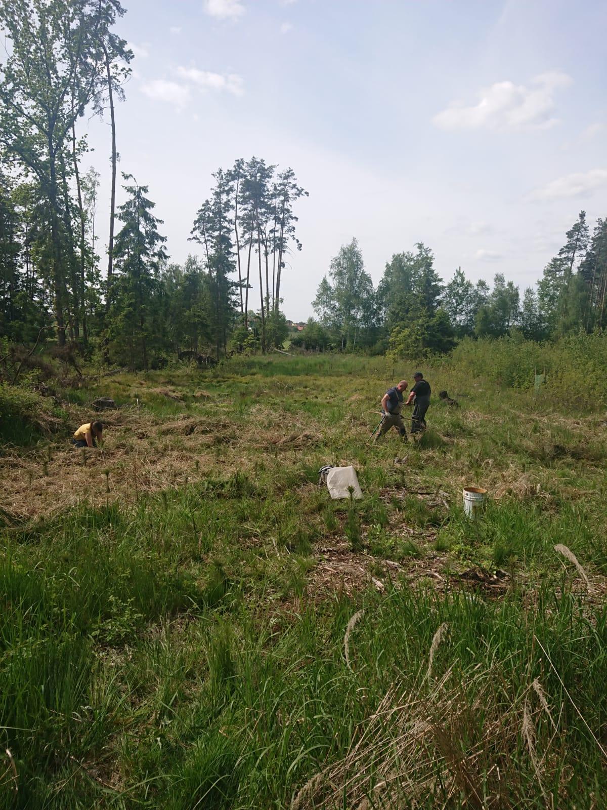 sázení lesa